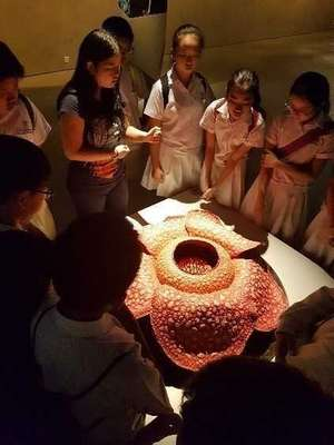 P6 Learning Journey - Lee Kong Chian Natural History Museum 02